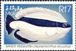 Apolemichthys arcuatus