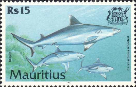 Carcharhinus wheeleri