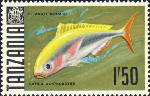 Caesio xanthonotus