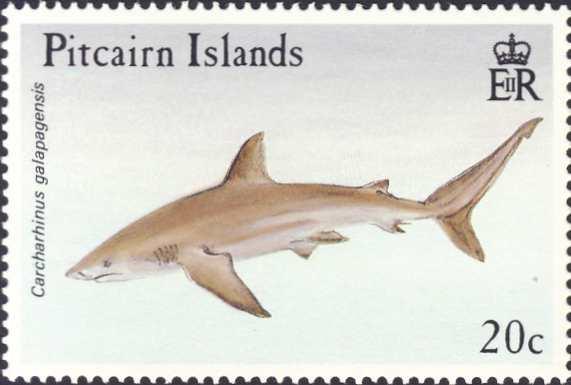 Carcharhinus galapagensis