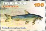 Barbus brachycephalus