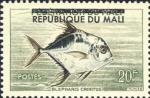 Blepharis crinitus