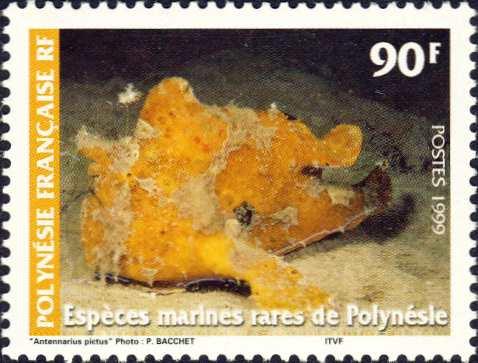 Antennarius pictus
