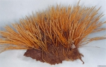 Nemertesia antennina (Linnaeus, 1758)