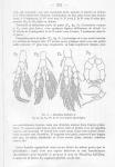 bulbiferus P5