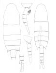 clevei body
