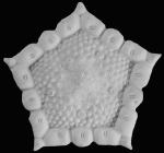 Akelbaster MNHN specimen