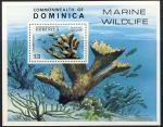 Acropora palmata