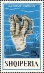 Alcyonium palmatum