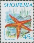 Astropecten aurantiacus