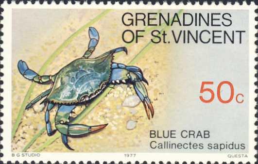 Callinectes sapidus