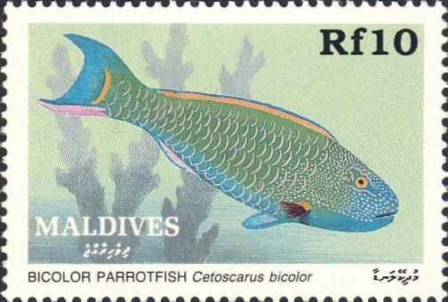 Cetoscarus bicolor