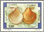 Chlamys varia