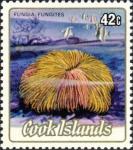 Fungia fungites