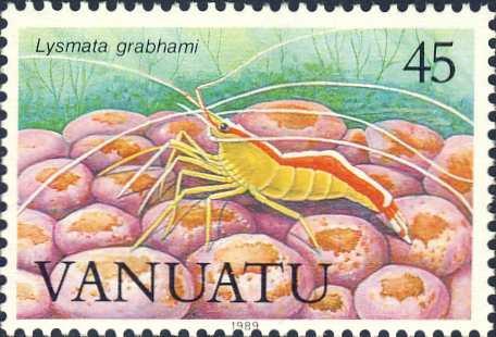 Lysmata amboinensis