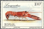 Nephrops norvegicus