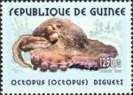 Octopus digueti