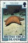 Oreaster reticulatus