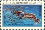 Palinurus japonicus