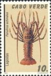 Panulirus echinatus
