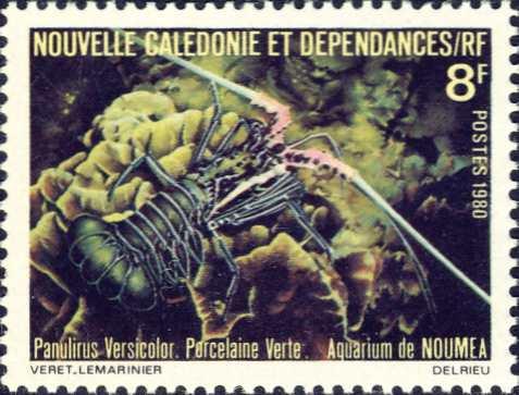 Panulirus versicolor
