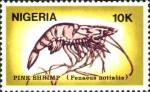 Penaeus notialis