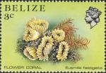Eusmilia fastigiata