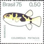 Colomesus psittacus
