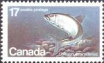 Coregonus canadensis