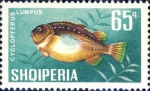 Cyclopterus lumpus