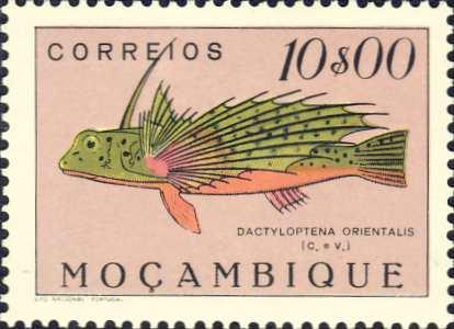 Dactyloptena orientalis