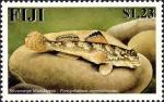 Periophthalmus argentilineatus