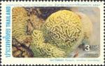 Platygyra lamellina