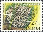Pocillopora damicornis