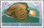 Pomacanthus annularis