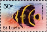 Pomacanthus paru (juv.)