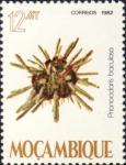 Prionocidaris baculosa