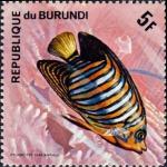 Pygoplites diacanthus
