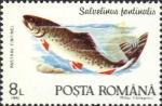 Salvelinus fontinalis