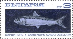 Sardinops sagax