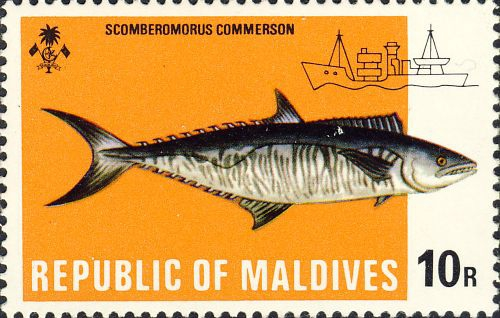 Scomberomorus commerson