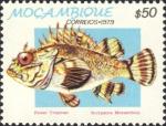 Scorpaeniformes