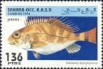 Sebastes dactylopterus