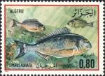 Actinopterygii