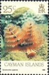 Ringwormen