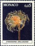 Spirographis spallanzanii