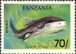 Squatina africana