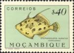 Stephanolepis auratus