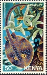 Rajiformes