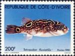 Tetraodon fluviatilis